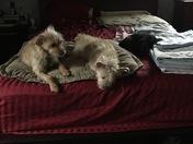 3 Bed Buddies