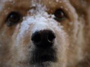 My winter pup