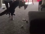 Noah the cat turns Odell Beckham Jr. with this awesome catch!