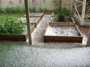 Hail Storm in my garden 4/24/2015
