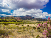 Spring blooms near Bent NM