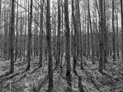 See-Thru Forest