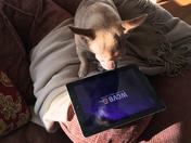 Cody on the iPad