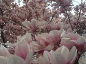 Spring at last!!