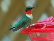 The Hummers Are Back :-)