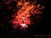 Beautiful Sunset tonight!