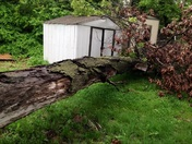 Storm causes tree down