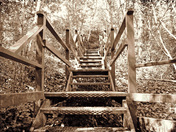 Stairway from the woods