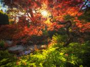 A Magical Tree