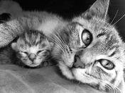 3a. Kitten Cuddles