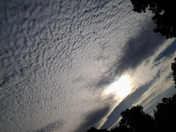 Beautiful Altocumulus clouds today!