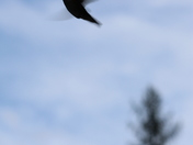 5d. In Flight