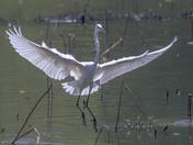 Sweet landing