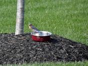 Feeding Bluebirds