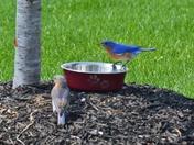 Bluebird snack