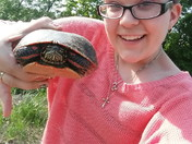 Turtle crossing the road! Watch out for them and help them along their way!