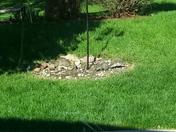 Strange birds at the bird feeder