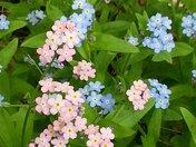 adk wild flower