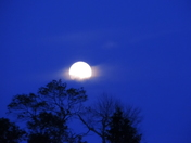 Views of the Strawberry Moon