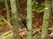 Woodpecker visit!