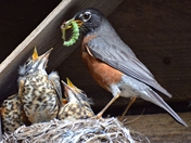 feeding the babies