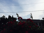 storm brewing over the roses