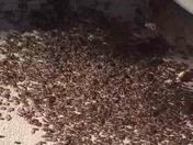 Mound of ants!