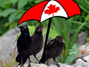Happy Canada Day....
