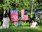 Daisy Mae and Bandit love any chance they get for a photo in Sandwich NH!