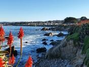 Monterey Bay,Ca.