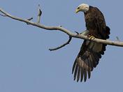 Wing Stretch