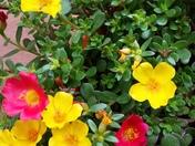 Blooming in MT