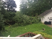 tree down Anderson Twp