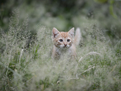 3c. Kitten in the grass