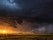Wheat Field & Rainstorm