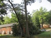 Tree struck by lightning last night in Winston-Salem.