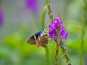 Pollinators..