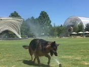 Dog Days at Myriad Gardens