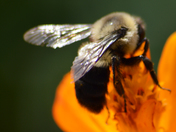 Bees and things
