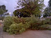 Large Branch Down Blocking Road