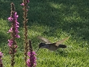 Not many blooms left but at least there are a few for the hummingbirds in Glenwo