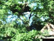 Jarden de Dieu -- God's Garden