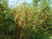 Salatin`s Orchard