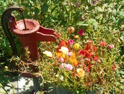 Flower pump