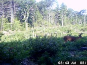 Two nice bucks feeding.