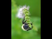 4c. Pollinator
