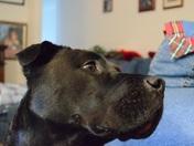 National Dog Day - Angus