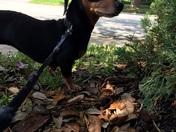 National dog day - Hunny