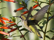 Insects and Hummingbirds Oh My