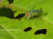Fly eats fly
